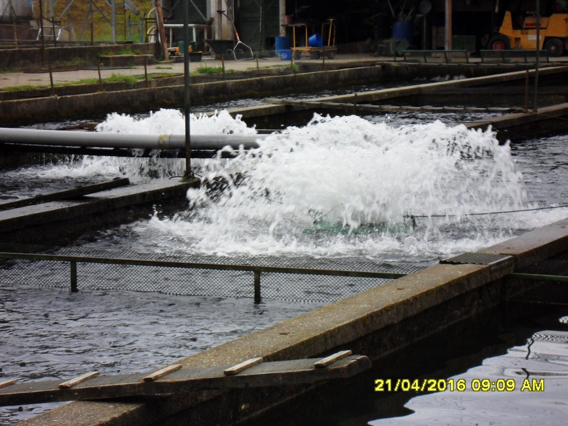 Système d'oxygénation des bassins