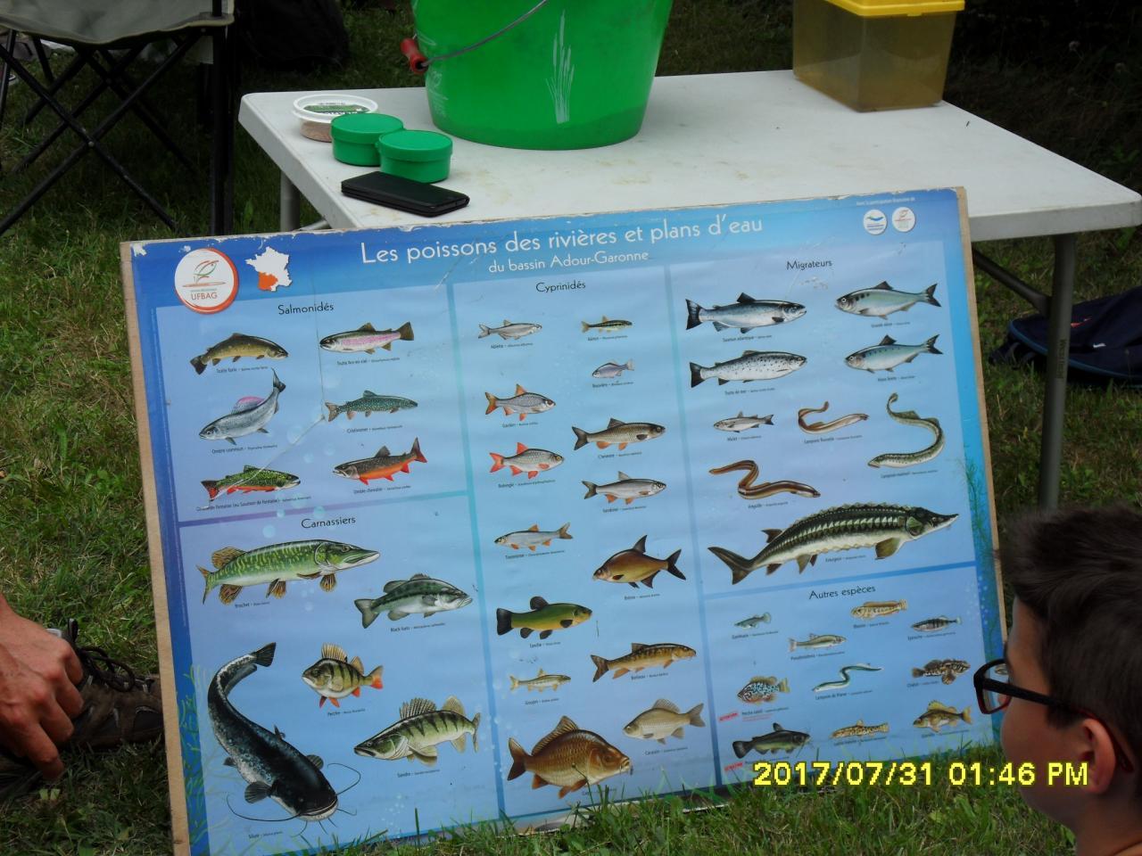 Les poissons des Landes