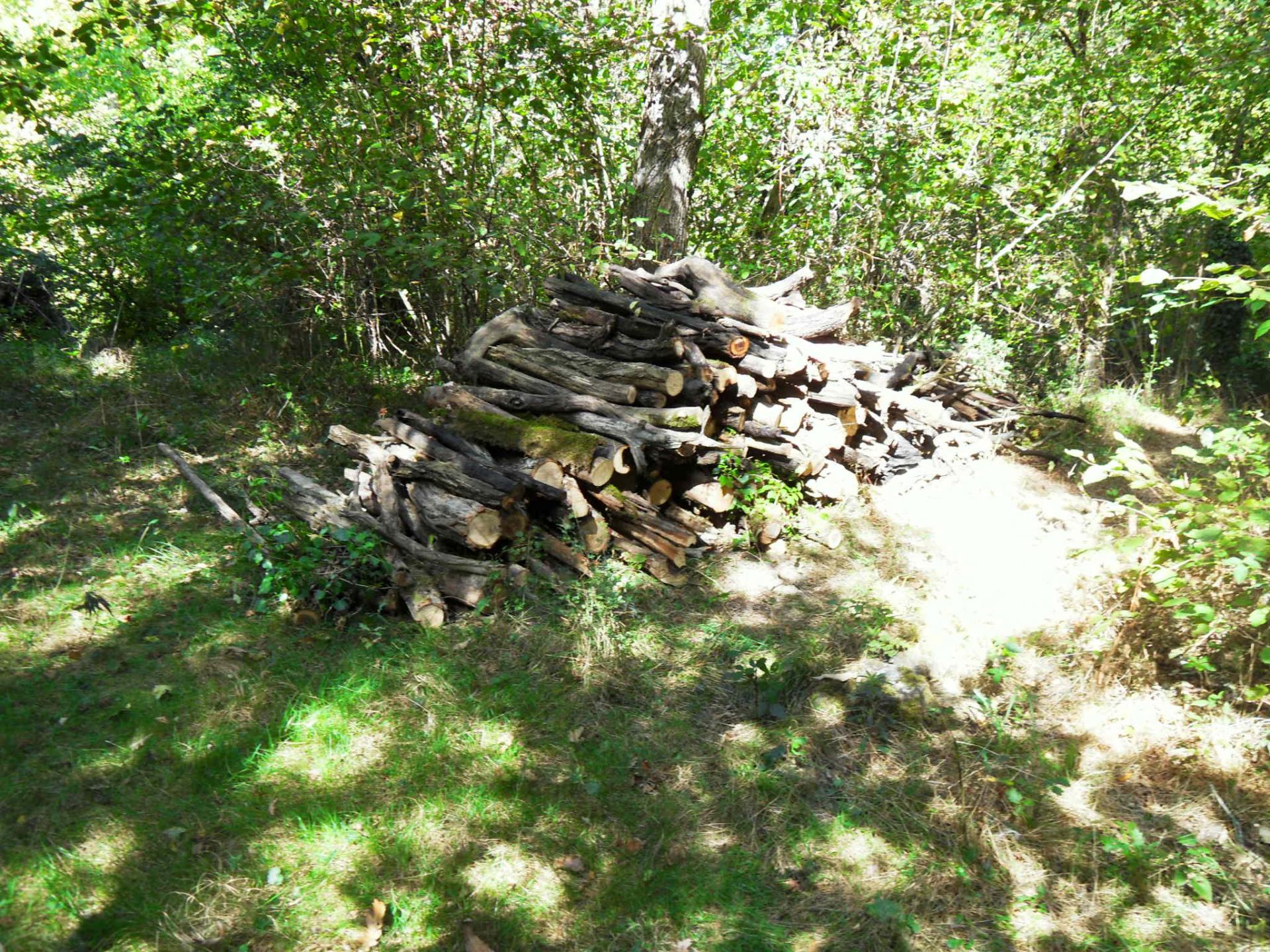 Aperçu d'une partie du bois sorti