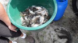 Mise à l'eau du poisson